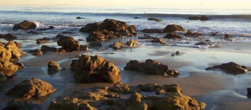 Malibu. - [Alfredo Hernandez via Wikimedia Commons]