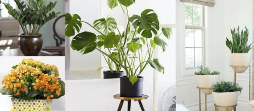 Plantas de interior en decoración