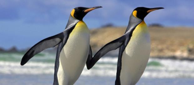 Los científicos han evaluado la población fragmentada de las aves en el Océano Austral y han llegado a la conclusión de que algunos bastiones