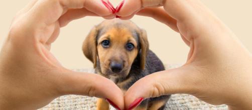 7 beneficios de tener mascota para tu salud mental - muyinteresante.es