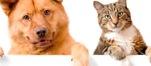 Legislador promueve proyecto de ley para el uso de la marihuana en mascotas