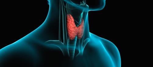 La tiroides merece especial control por sus funciones en el organismo humano. - infoviral.net
