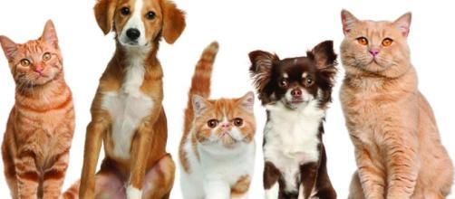 Remedios caseros para nuestras mascotas.