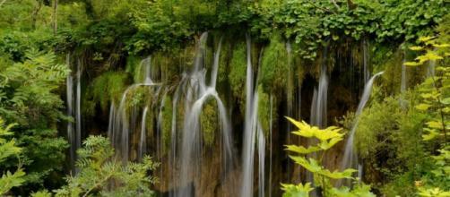 Se dice que la selva tropical es reguladora del clima mundial