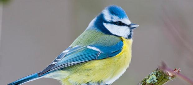 ¡Gracias a 136.000 amigos de pájaros!.