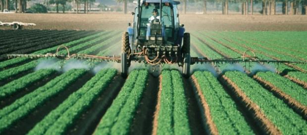 La agricultura como sector de la economía.