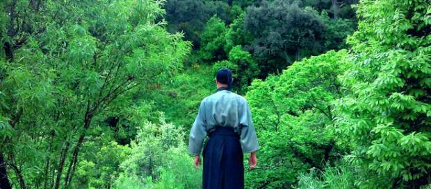 Shinrin Yoku una propuesta para la salud y la prevención de las enfermedades