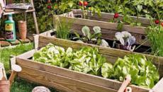 Agricultura social: Donde los jardines urbanos pueden crecer