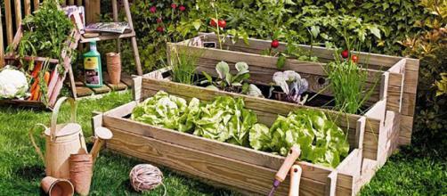Agricultura social: Donde los jardines urbanos pueden crecer.