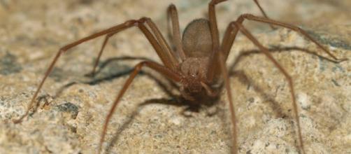 Efecto de las arañas en las plantaciones.
