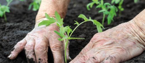 Le scelte del governo hanno dato valore all'agricoltura (Foto: - tp24.it)