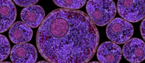 Qué es un virus? | portalastronomico.com - portalastronomico.com