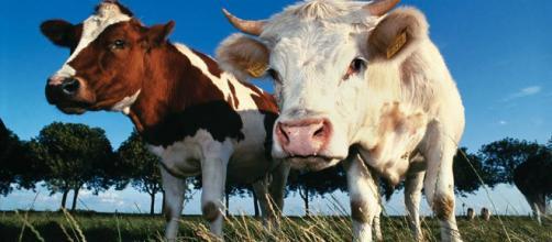 Deveríamos parar de comer carne? | Superinteressante - com.br