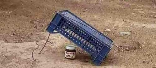 """NutellaGate : Un tweetos a publié cette image avec la légende ! """"how to trap a french"""""""