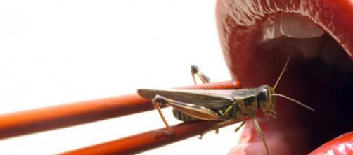 Tan solo imaginarnos comiendo insectos nos produce una sensación de desagrado