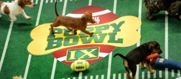Aqui el gran evento Puppy Bowl 2018