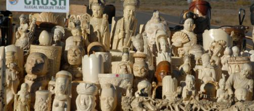 Collection of carved ivory figures (Image via USFWS Mountain-Prairie - Flickr)