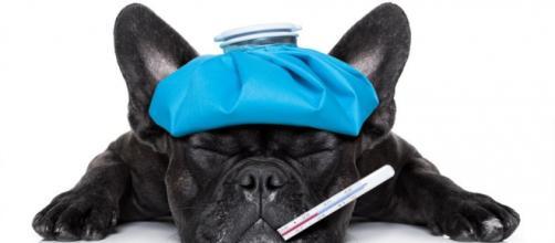 La gripe en perros, ¿cómo cuidarles? | EROSKI CONSUMER - consumer.es