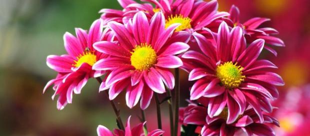 Las plantas con flores probablemente se originaron hace entre 149 y 256 millones de años según una nueva investigación liderada por UCL.