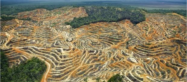 Palmölplantage inmitten eines Regenwaldes