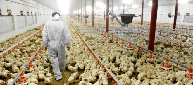 Rettung der Menschheit: Vegane Ernährung?