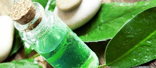 Aceite Esencial de Árbol de Té - Melaleuca - Unisima - unisima.com