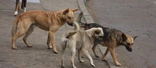Municipio ampliará refugio para animales domésticos