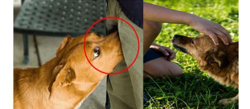 Os cachorros têm comportamentos incríveis