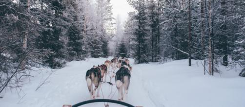 Sled Dog team - Photo by fox jia on Unsplash