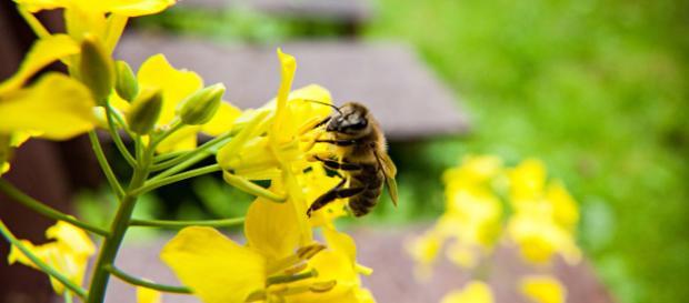 Salvemos a las abejas - greenpeace.org