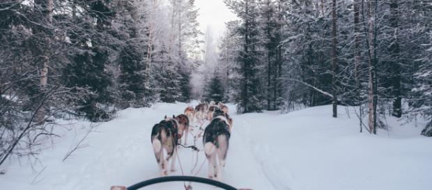 Sled Dog team - Photo by fox jia on Unsplash