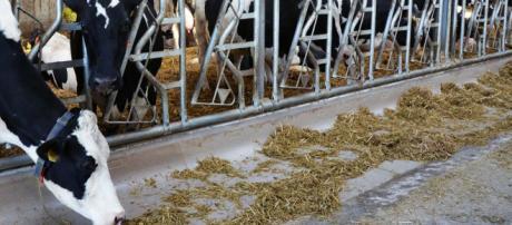 Los nuevos comederos mejorarán la eficiencia.