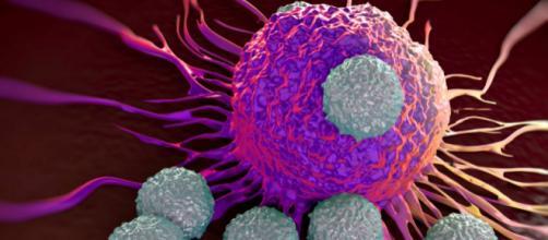 Esiste un crostaceo che si riproduce come i tumori