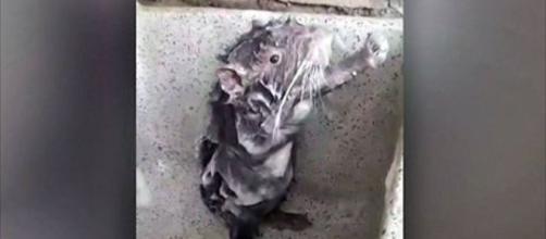 Ratinho aparece sofrendo em vídeo