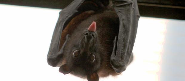 Reproducción de los Murciélagos - Murciélagos Información y ... - batworlds.com