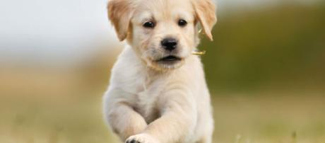 How to Establish a Routine and Boundaries With Your Puppy ... - akc.org