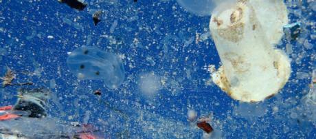 Un 'océano de plástico' está acabando con la vida marina en el ... - cnn.com