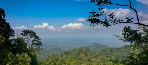 Gunung Pulai, una reserva en Malasia