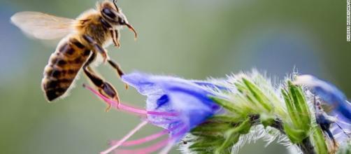 Mariposas, abejas y escarabajos: varios polinizadores están ... - cnn.com