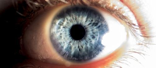 Medici estraggono 14 vermi dall'occhio di una donna. È la prima ... - diariodelweb.it