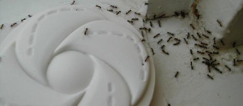 Eliminar Hormigas Archivos - Eliminar Plagas - eliminarplagas.com