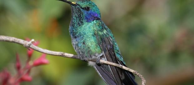 Cómo atraer colibríes al jardín - jardineriaon.com