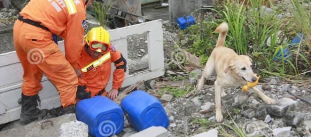golden retriever rescata a sobrevivientes
