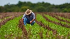 Agricultores ganadores. ¿Cómo será la agricultura en el futuro cercano?