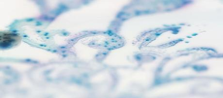 Gut bacteria. (Image via Dr. Nicola Fawcett/Wikimedia Commons used under CC BY-SA 4.0.)