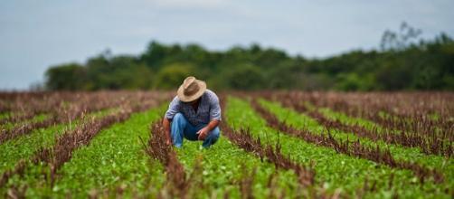 ¿Cómo sera el futuro de la agricultura, en un escenario que ve la desaparición progresiva del suelo fértil?.