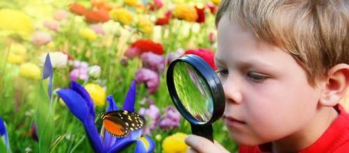 Dimostrata la correlazione tra natura e sviluppo intellettivo - FamilyEducation