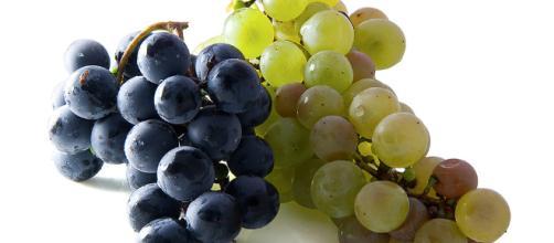 Mini uvas frescas para Nochevieja - Punto Fape - puntofape.com