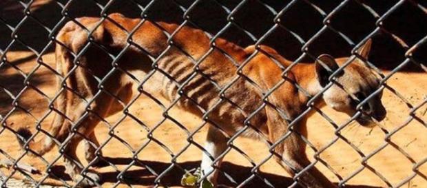 AFP: Animales en peligro de extinción mueren en zoo de Venezuela ... - noticiero52.com