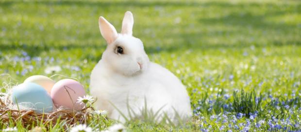 Wiosna i Wielkanoc (inaczej Zmartwychwstanie Pańskie) przychodzą kilka razy w ciągu roku (fot. pixabay.com)